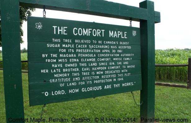 Comfort Maple