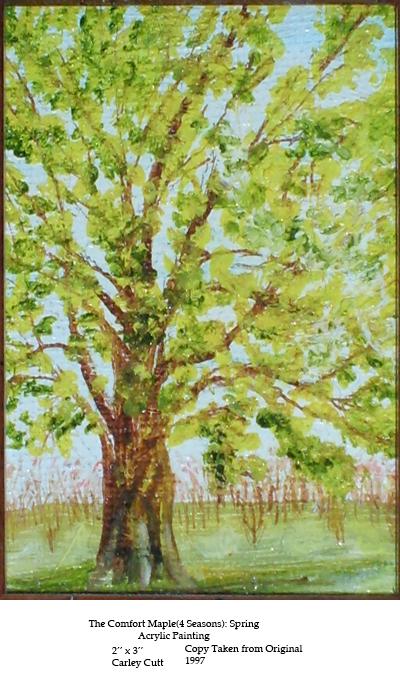 comfort-maple-spring
